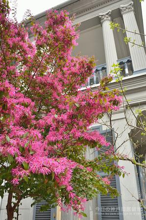 春色の神戸旧居留地
