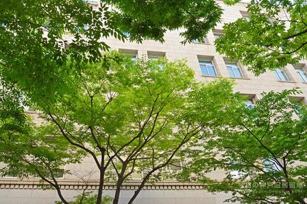 新緑の神戸旧居留地